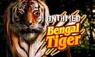 Untamed Bengal Tiger